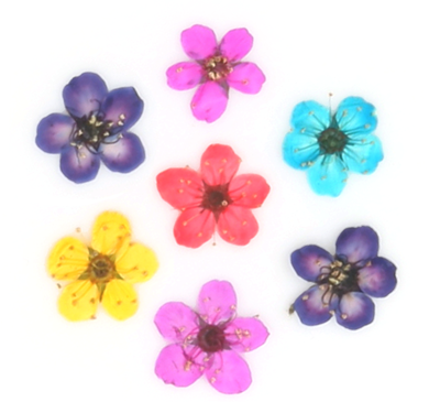 Pressed flowers, fleabane 100pcs red turquoise yellow purple pink floral art