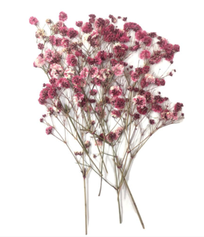 Pressed flowers, mauve baby's breath gypsophila 20pcs floral art, craft