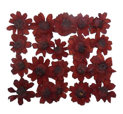 Pressed flowers, dark red zinnia 20pcs floral art resin craft