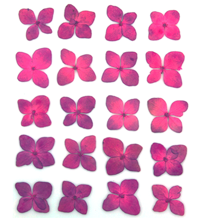 Pressed flowers, small mauve hydrangea 20pcs floral art resin craft jewellery