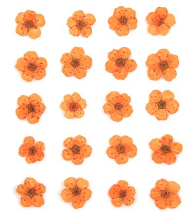 Pressed flowers, orange bridal wreath, floral art resin craft jewellery making
