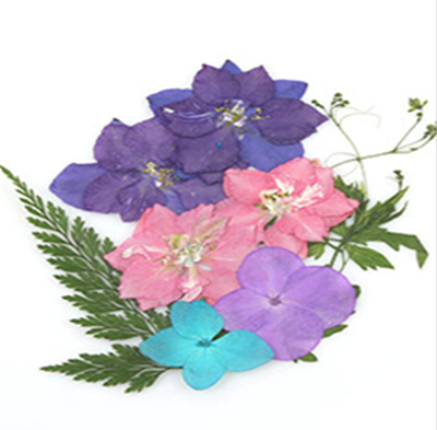 Pressed flowers mix, larkspurs hydrangea foliage floral art, resin craft