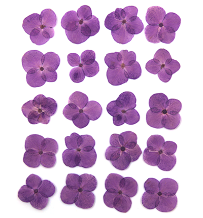 Pressed flowers, purple hydrangea 20pcs floral art, resin craft, card making
