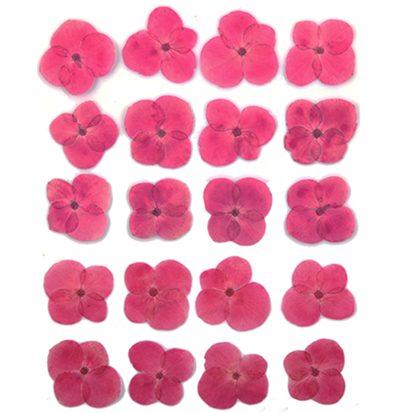 Pressed flowers, hot pink hydrangea 20pcs floral art, resin craft
