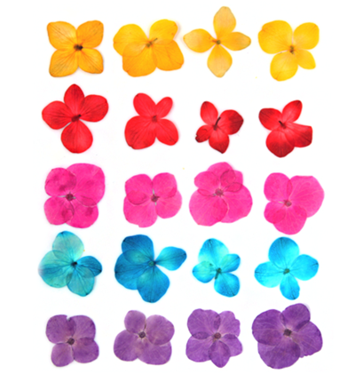 Pressed flowers, hydrangea 20pcs pink, purple, yellow, turquoise, red