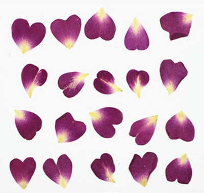 Pressed flowers, purple rose petals 20pcs floral art resin craft