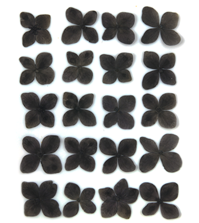 Pressed flowers, black hydrangea 20pcs floral art, resin craft
