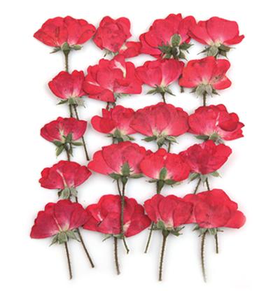 Pressed flowers, red mini half bloomed rose 20pcs floral art, resin craft