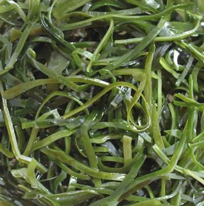 Kelp seaweed 20g, dried sliced for soup, salad, vegan vegetarian diet iodine