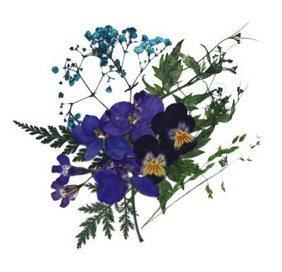 Pressed flowers, pansy delphinium lobelia gypsophila, foliage