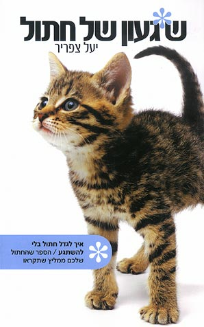 שיגעון (שגעון) של חתול - יעל צפריר