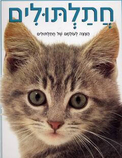 חתלתולים - הצצה לעולמם של חתלתולים - קרי סקוט