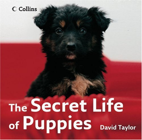 The Secret Life of Puppies / David Taylor
