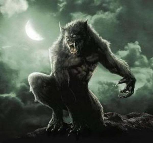 הזאב השחור