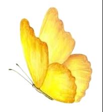 פרפר צהוב