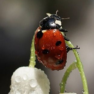חיפושית (כשארצה, אכתוב.)