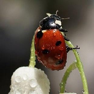 y34l - חיפושית