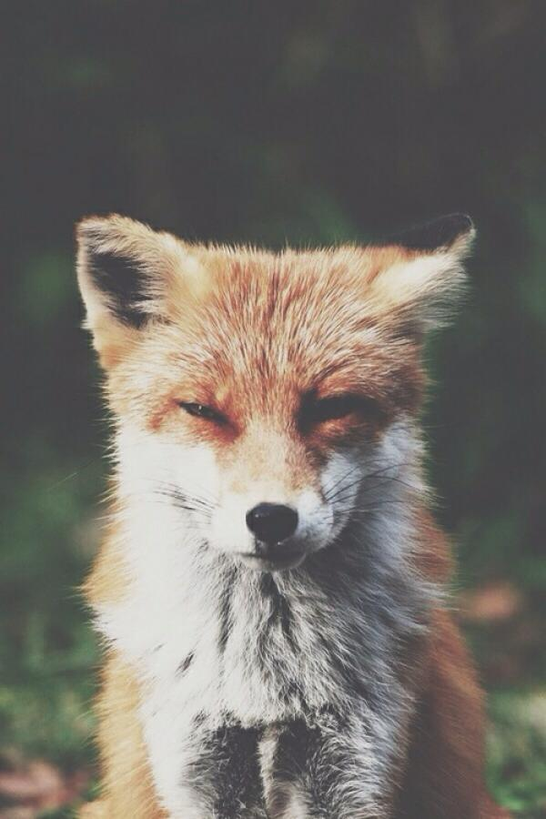 【FOX】
