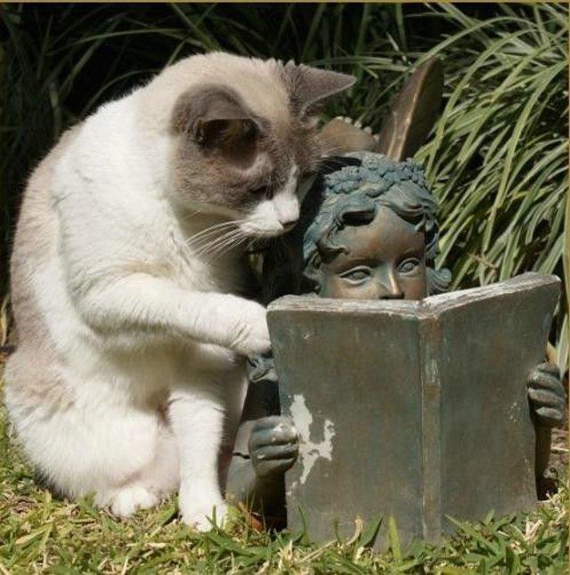 חתול השיממון