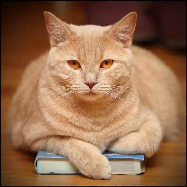 חתול ספרים