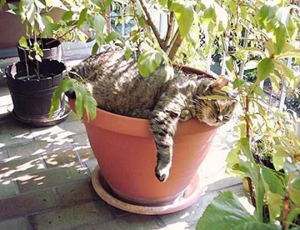 החתול הירוק של הלפר