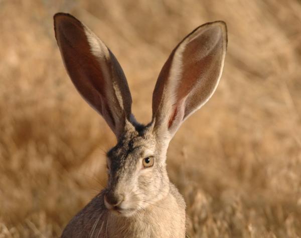RabbitsAreHere