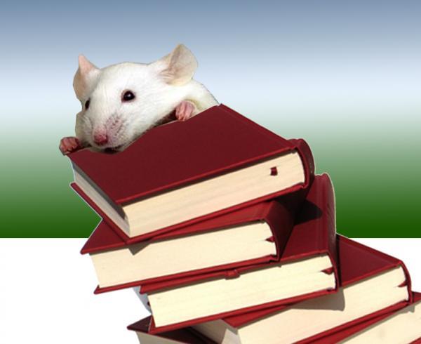 עכבר ספרים