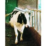Brosse à vache Vink