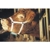 Harnais marqueur en cuir pour taureau