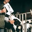Réhydrateur de veau avec sonde fixe