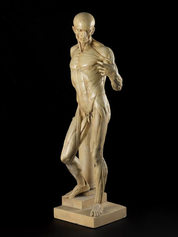 Plaster Cast Of Corch Male Anatomical Figure It Science Museum