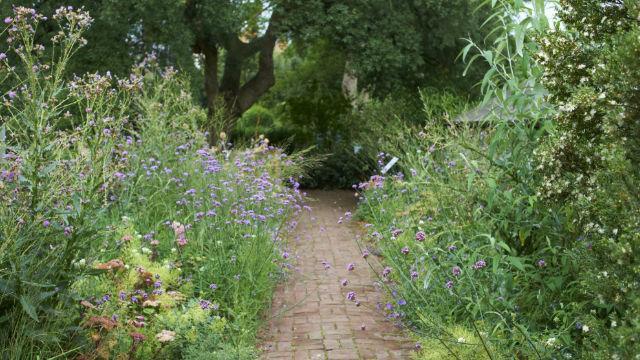 Photo of Chelsea Physic Garden