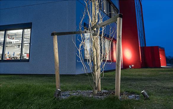 Stemningsbelysning av et tre i hagen