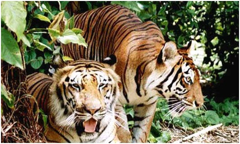 Andhra Pradesh Places to Visit - Nallamala Forest