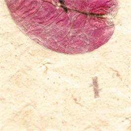 Handmade Bhonswaa Flower Paper 51x76cm 65gsm thumbnail