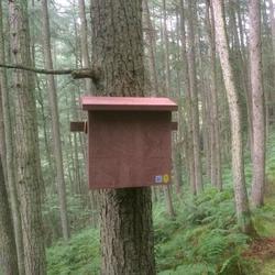 Pine Marten Den Box image