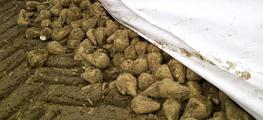 Agritec Sugar Beet Covers image
