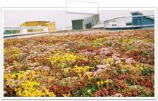 NatureMat® Plants - Blackdown Green Roof