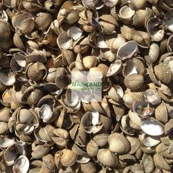 Cockle Shell Mulch image