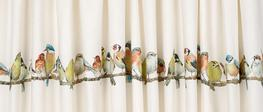 Garden Birds Pencil Pleat Ready Made Curtains image