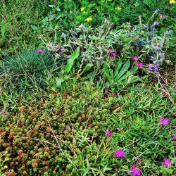 Cefil Eco-Roof - Sedum and Wildflower Blanket System image