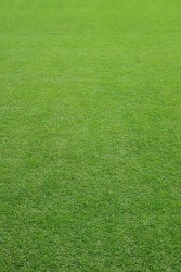 An all–round general purpose sports field mixture that provides quick establishment and forms a resilient surface for outfields and local authority play areas. A9 is suitable for a wide range of soil types....