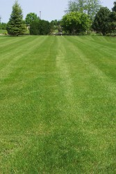 A22 is a unique perennial ryegrass based low maintenance mixture.  CABRIO is rated highly for slow re–growth after mowing.  Most traditional low maintenance mixtures are fescue based and consequently have limited wear tolerance.  A22 offers the best of both ...