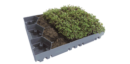 EcoSedum Green Roof Tray - Pre Planted image