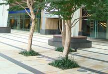 Urban tree soil image