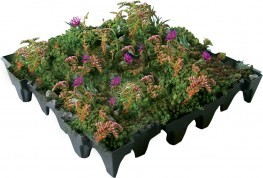 ANS GrufeKit Green Roof System image