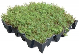 ANS GrufeKit Green Roof System - ANS Global