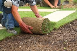 Landscaping :: Aztec Plants image