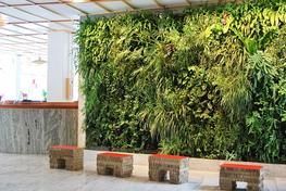 Living Walls :: Aztec Plants image