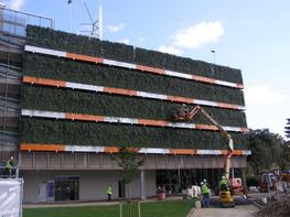 mobilane-uk_wallplanter-green-wall-using-green-screens-in-planters_photo_27_wallplanter-lister-hospital-p1010015-1024x768.jpg